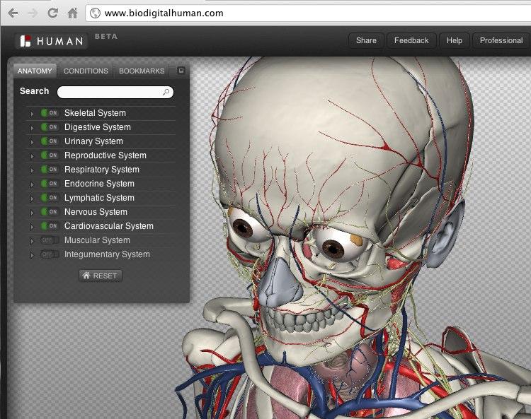BioDigital Human_ Explore the Body in 3D!
